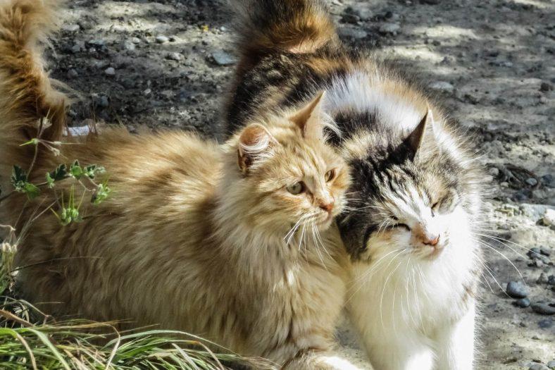 Kedinizin Sosyalleşmesini Nasıl Sağlarız?
