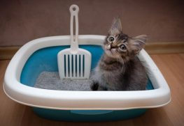 Kedi Kumunun Temizliği Hangi Sıklıkla Yapılmalıdır?