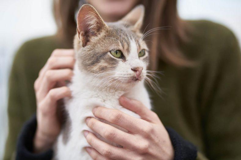 Bir Kedi Sahiplenmeden Önce Ne Kadar Bütçe Ayırmalıyız?