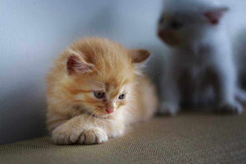 Kedilerin Nefret Ettiği Şeyler Nelerdir?