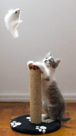 Kedi Halattan Tırmalama Tahtası ve Oyuncağı.jpg