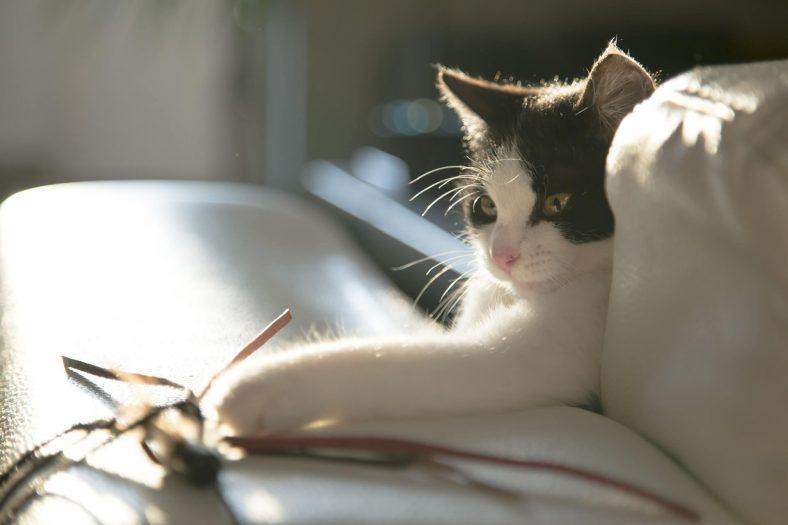 Kedi ve Oyuncağı