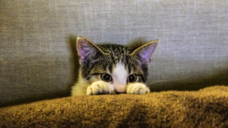 Kedim Kucağıma Oturmak İstemiyor Ne Yapmalıyım?