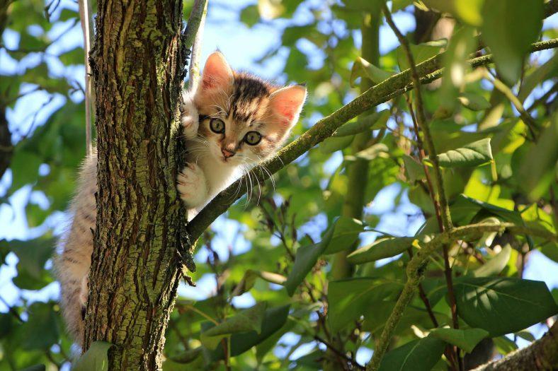 En Çok Sahiplenilen Canlının Kedi Olmasının 10 Nedeni