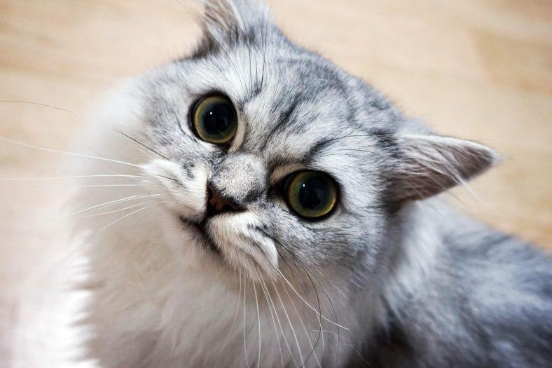Su İsteyen Kedi