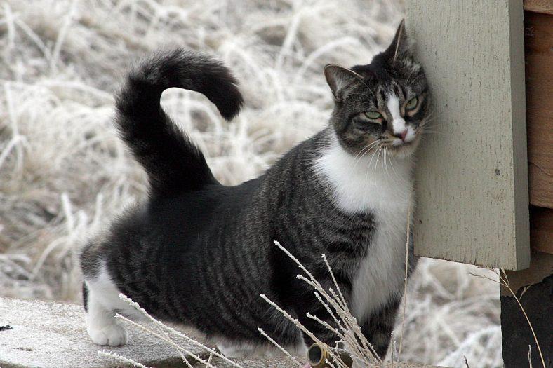Sürünerek Kendini Kaşıyan Kedi