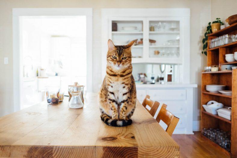 Tezgaha Çıkmış Kedi