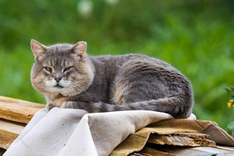 Kedi Kucağa Nasıl Alıştırılır? Kucakta Nasıl Tutulur?