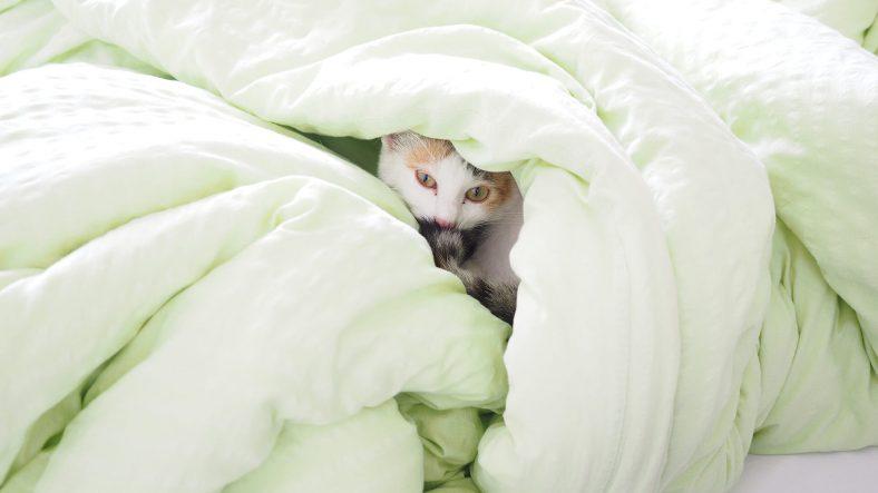 Yatağa Saklanan Kedi