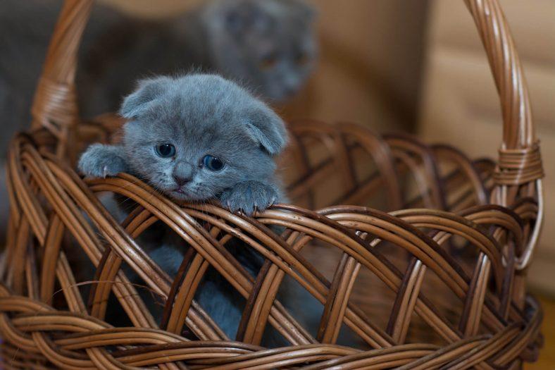 Yavru Kediye Tuvalet Eğitimi Verme