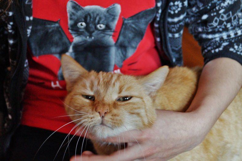 Çeneden Kedi Sevmek