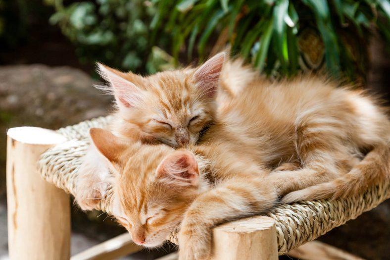 """Dünya Kediler Günü - Tüm """"Kediler Günü"""" Tarihleri ve Tarihçesi"""