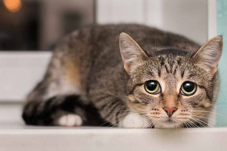 İshal Olan Kedi Hangi Durumda Veterinere Götürülmelidir?