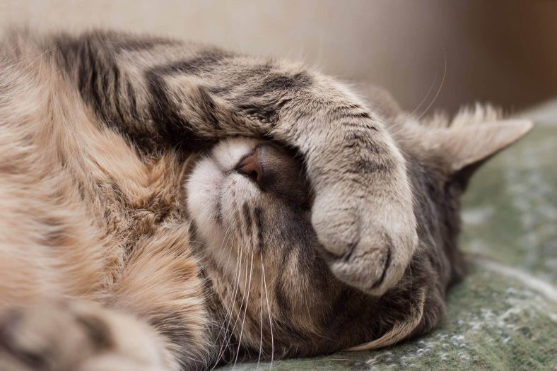 Kedilerde İshalin Nedenleri Nelerdir?