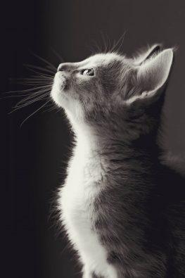 Yavru Kediler Su İçer Mi?