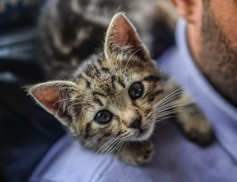 Yavru Kedilerin Susuz Kaldığını Nasıl Anlarsınız?