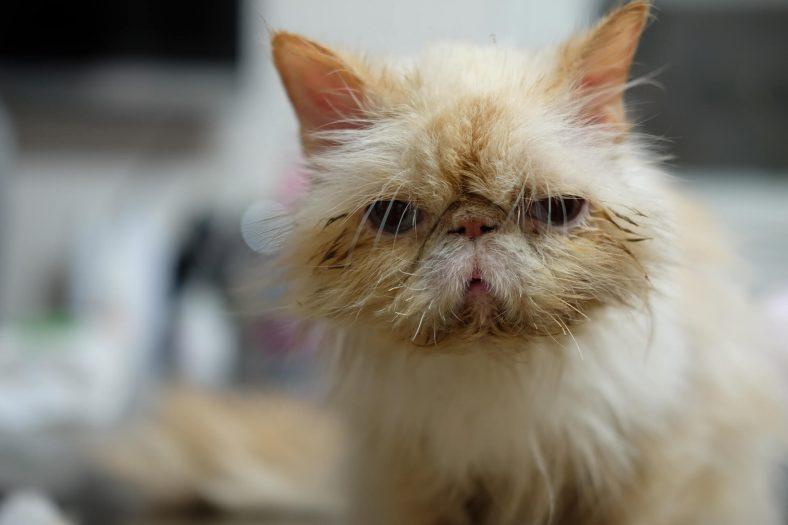 Kedi Gribi Nasıl Tedavi Edilir?