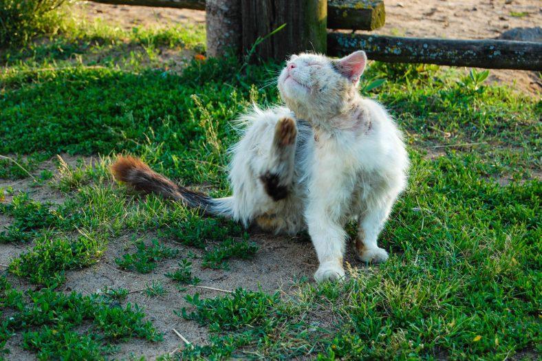 Kedide FIP Hastalığı Belirtileri ve Teşhis Edilme Süreci