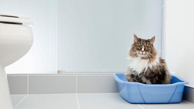 Kedi Tuvaleti ve Kum Çeşitleri