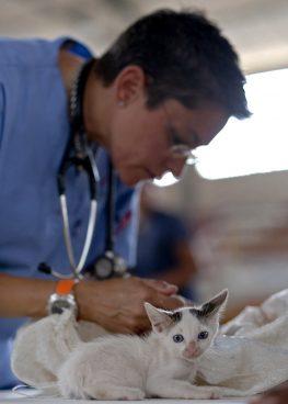 Kedilerde En Sık Görülen Hastalıklar
