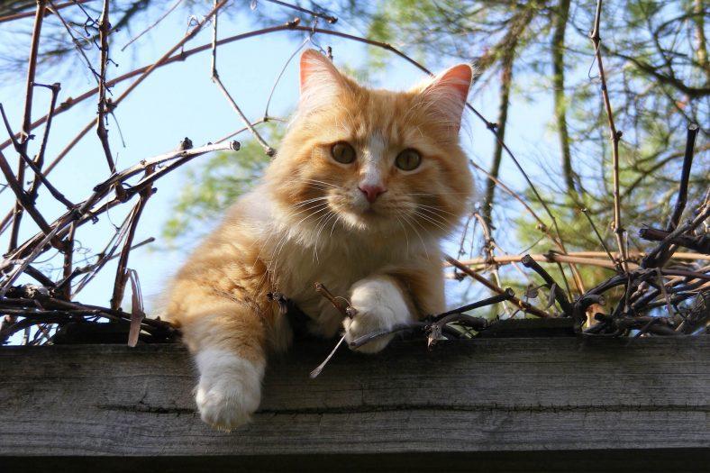 Konuşmak İsteyen Kedi Miyavlar