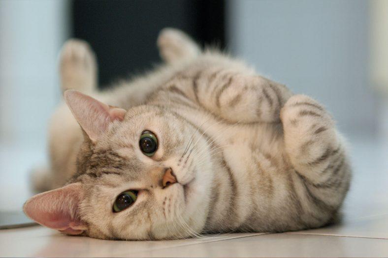 Hasta Kediye Ne Yapılır?