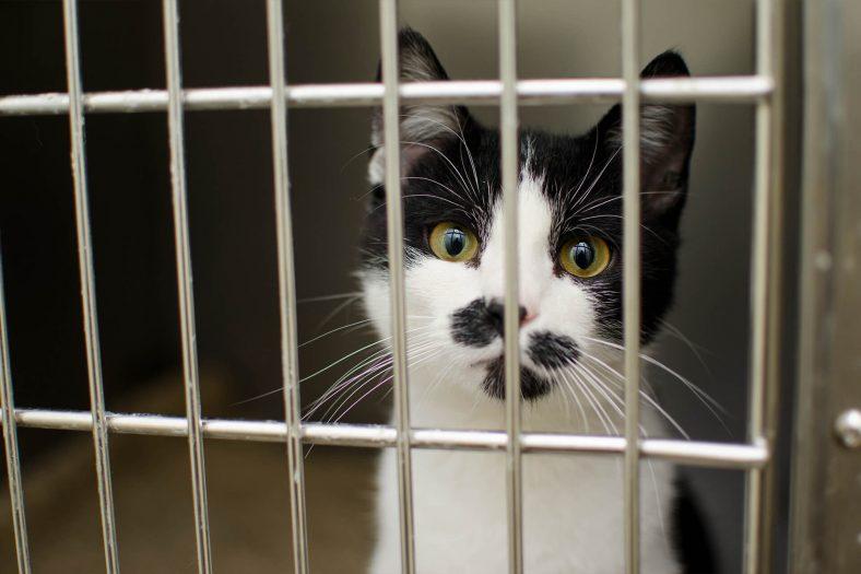 Hasta Yavru Kediye Ne Yapılır?