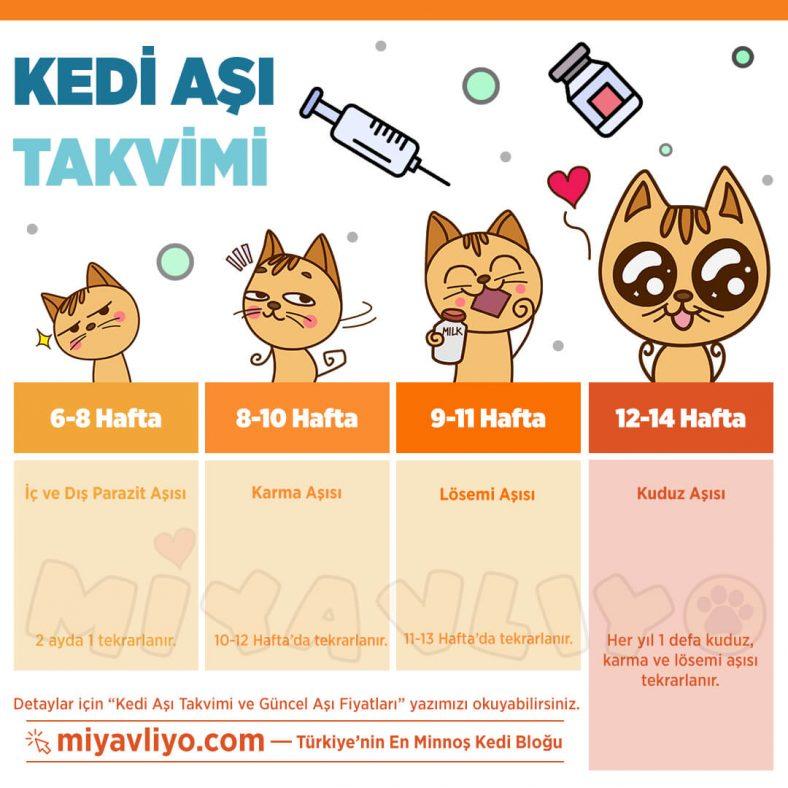 Kedi Aşı Takvimi
