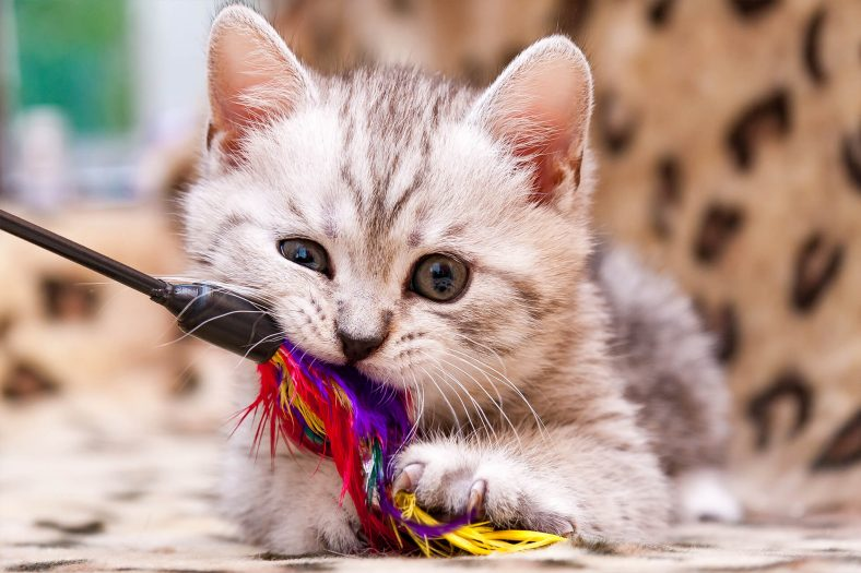 Kedi Çubuğu