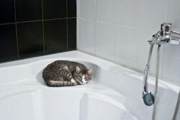 Kedi Şampuanlarının Özellikleri