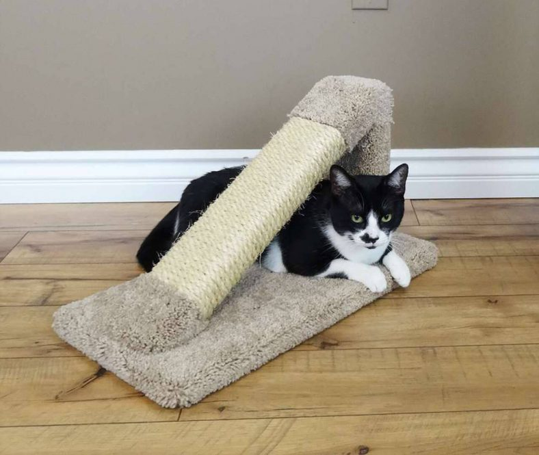 Kedi Tırmalama Rampası