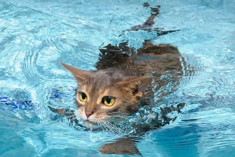 Yüzen Kedi
