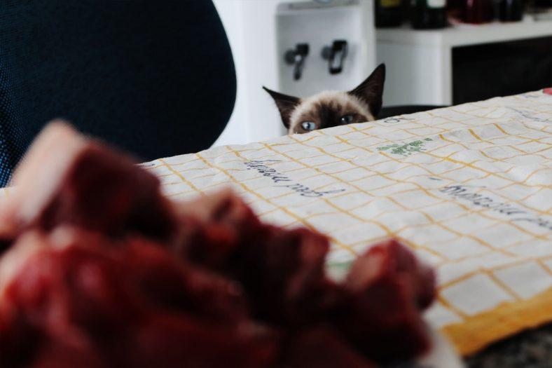 Ete Göz Dikmiş Kedi