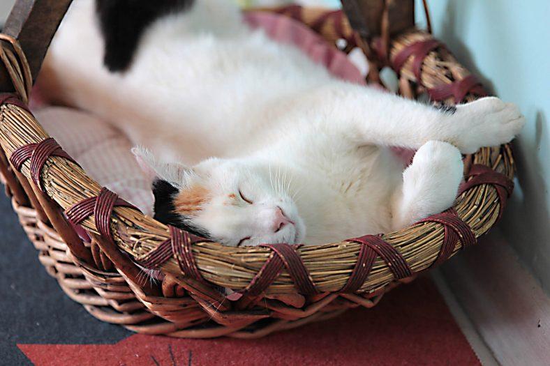 Kedi Maltı Nasıl Kullanılır?