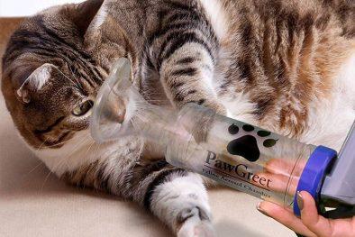 Kedilerde Öksürük Nedenleri