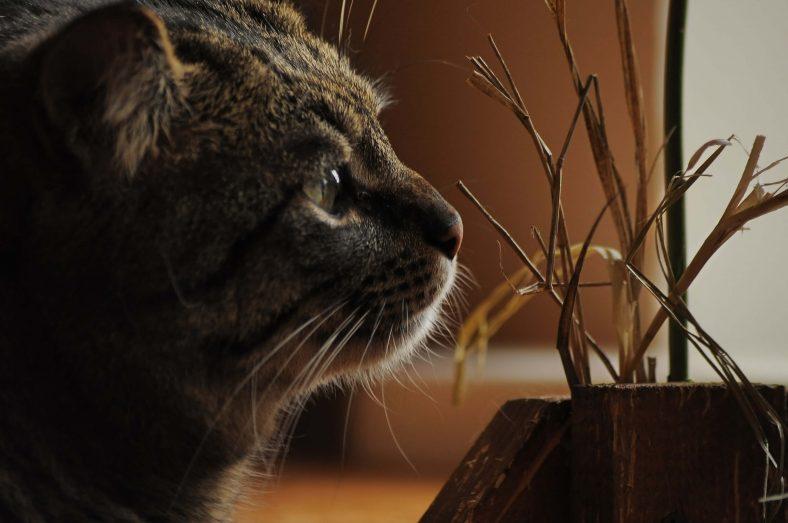 Kedilerimiz İçin Zararlı Olabilecek Ot Çeşitleri