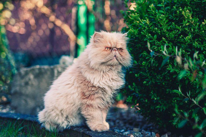 Kedilerimiz Neden Tüylerini Yutarlar?