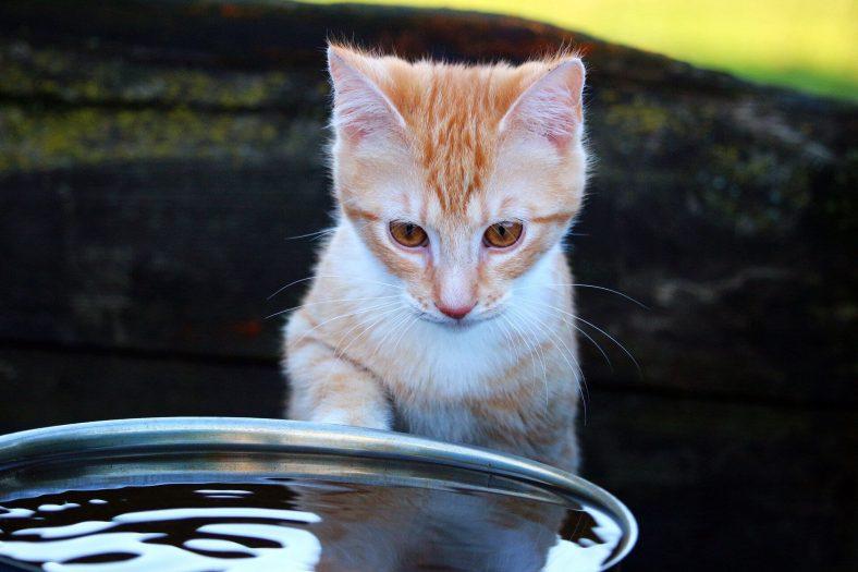 Kedim Yemek Yemiyor, Su İçmiyor