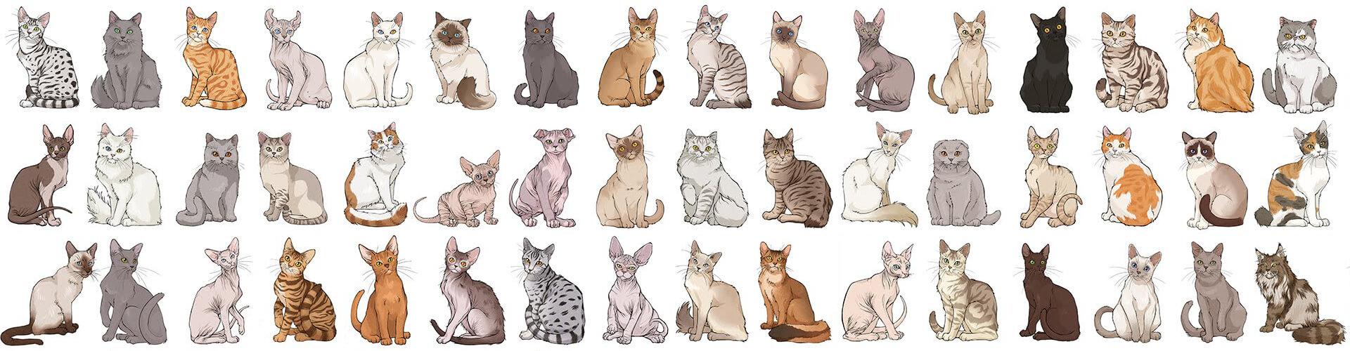 Tüm Kedi Cinsleri