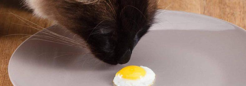 Kedilere yumurta yedirmenin faydaları var mıdır?