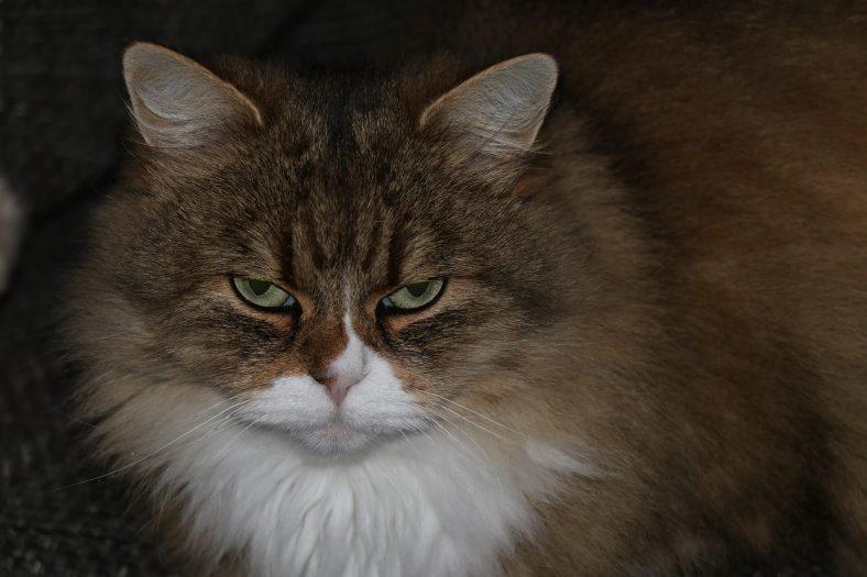 Agresif Kedi Eğitimi