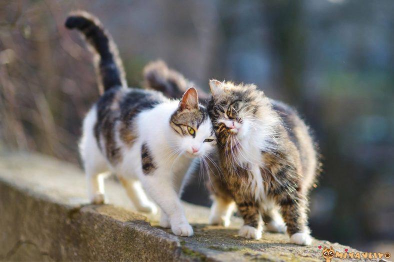 Akrep Burcu Kedi