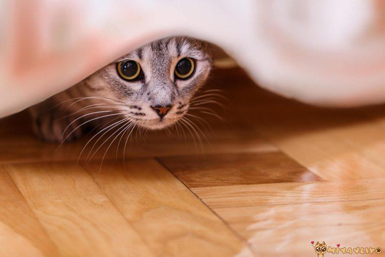 Eve Biri Geldiğinde Kediniz Kaçıyorsa