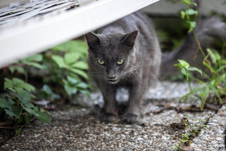 Hırçın Kedi Eğitimi