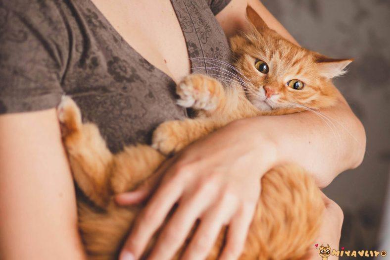Kedi En İyi Arkadaştır