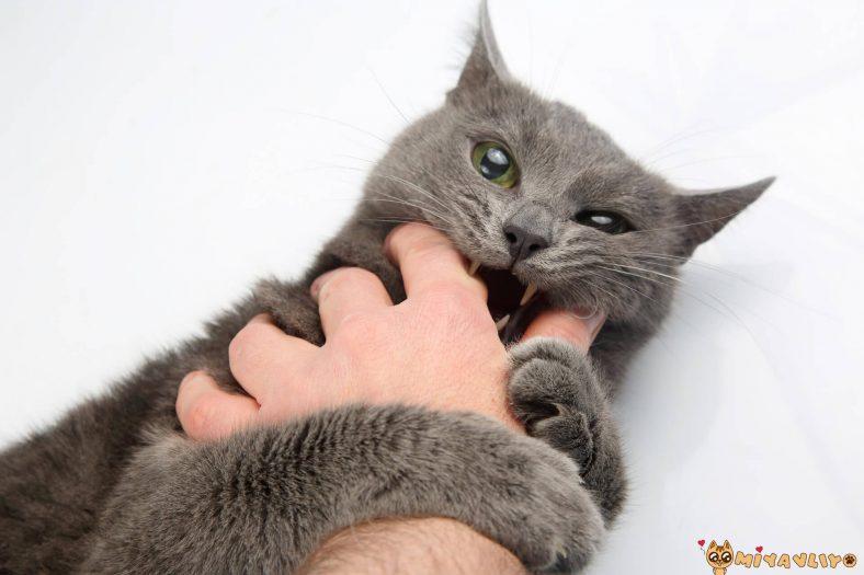 Kedi Isırmasına Çözüm