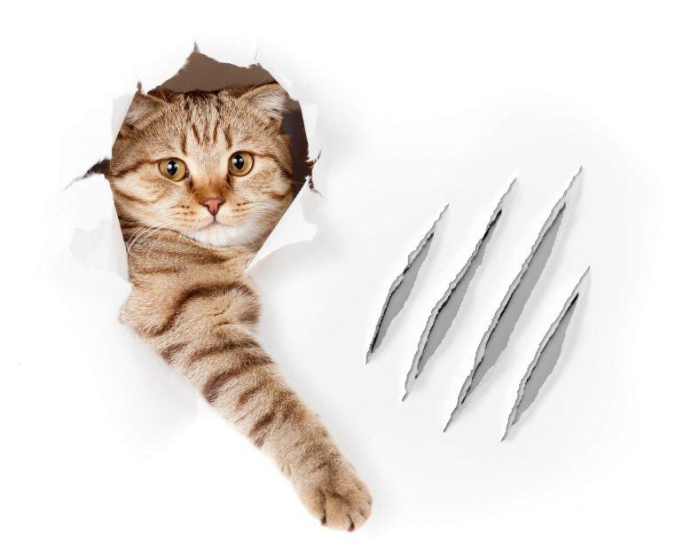 Kediler Neden Tırmalar?