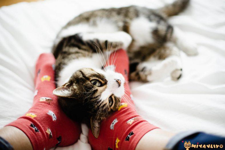 Kediniz Ayağınıza Yatıyorsa