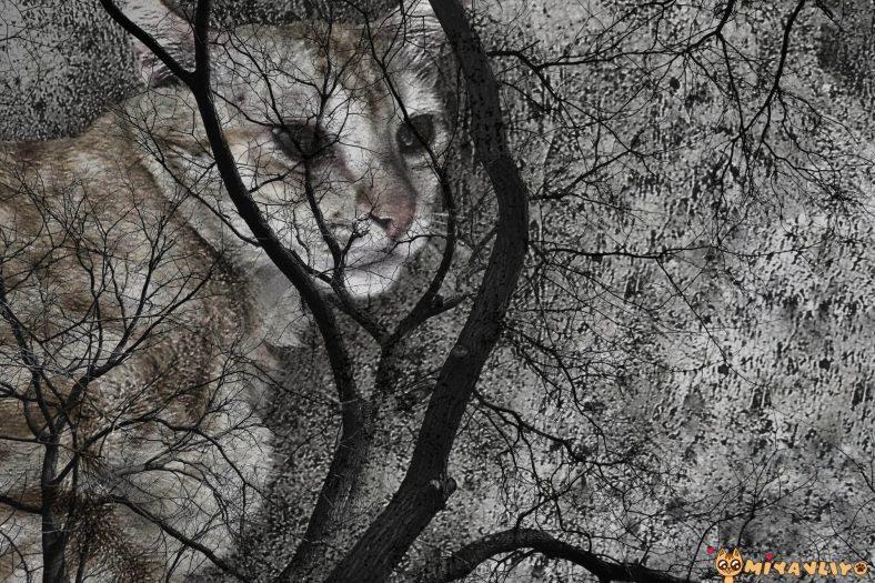 Rüyada Ölen Kedimi Gördüm