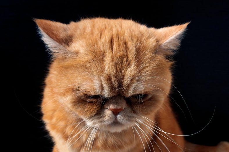 Suçluluk Duyan Kedi